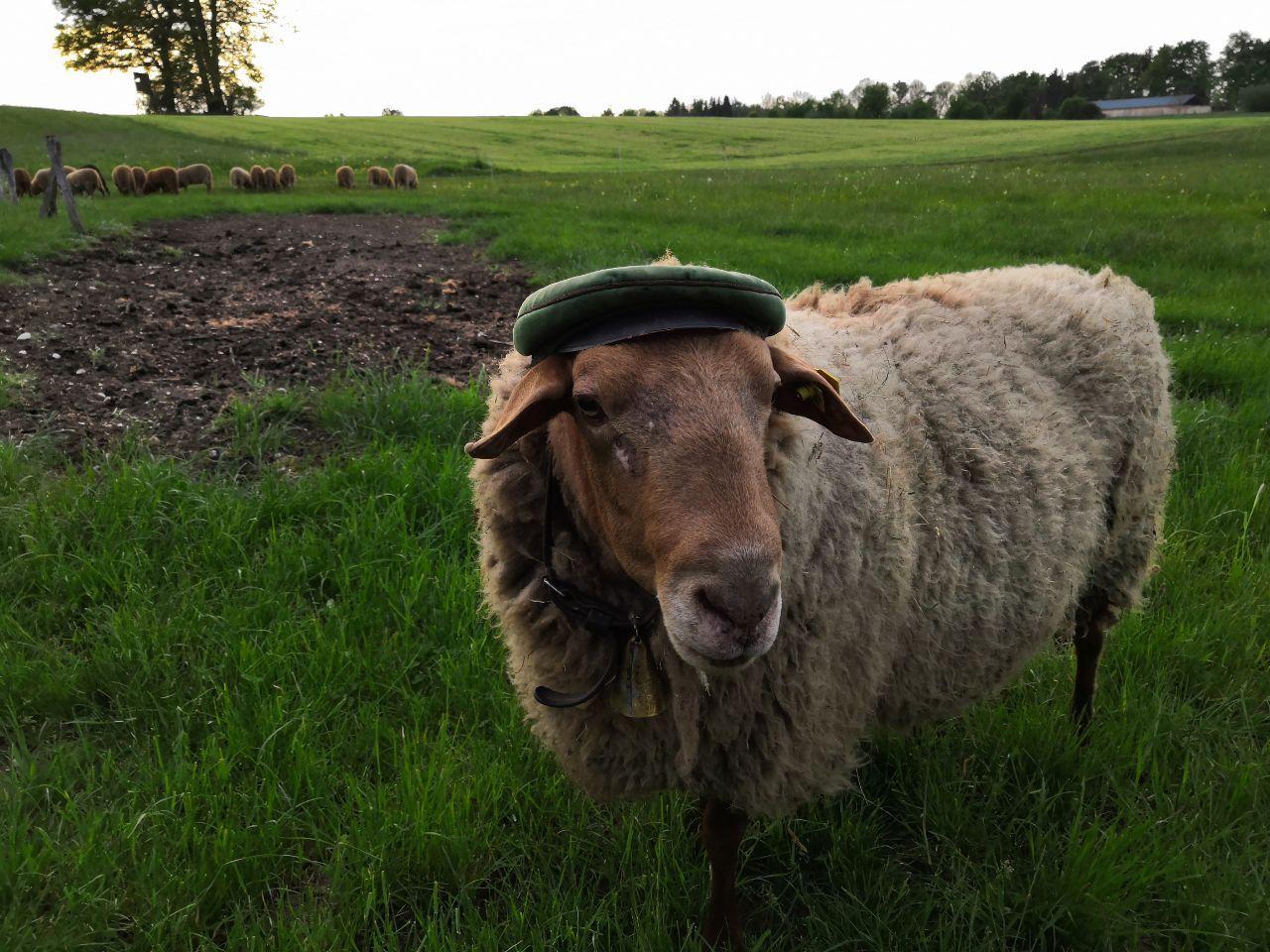 Burkard hat den Hut auf