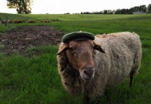 Burhard mit Hut auf der Weide
